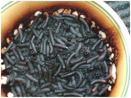 maccaroni cheeseburnt