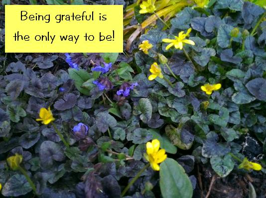 a grateful