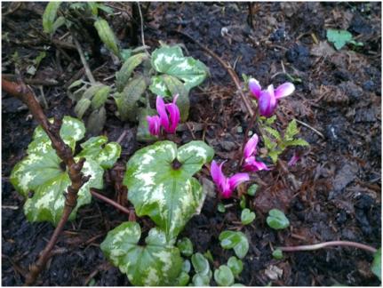 little tiny violets