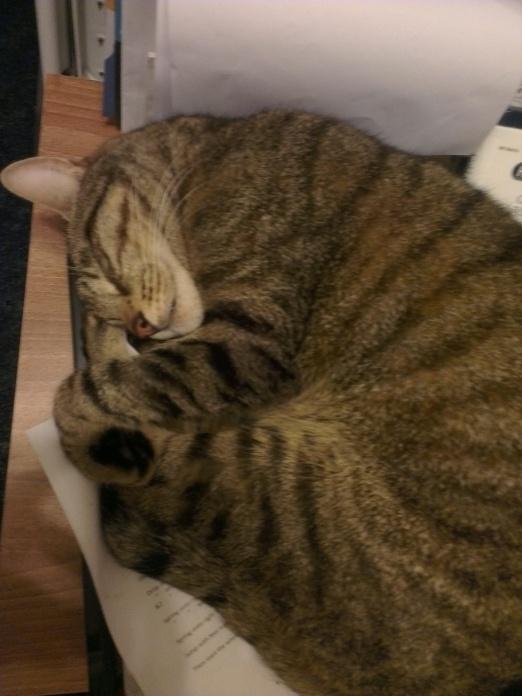 cat (5)