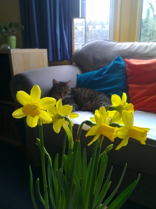 focus on daffs