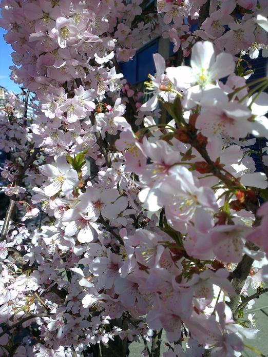 spring (1)