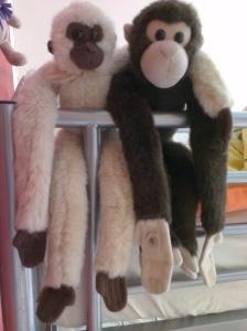 monkeys (1)