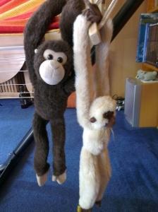 monkeys (2)