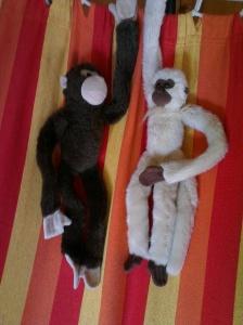 monkeys (3)