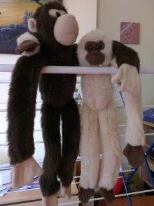 monkeys (5)