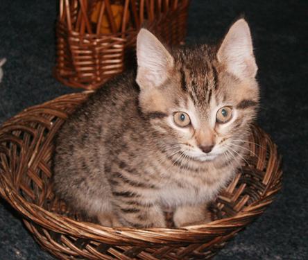 b cat2