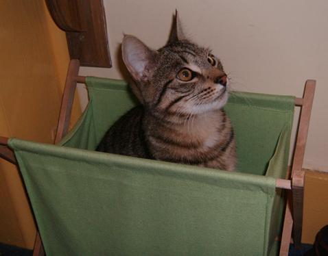 b cat5