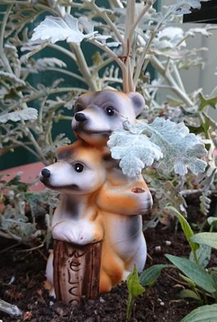 my meerkats