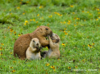 motherly love1