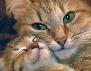 motherly love3