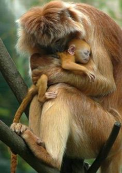 motherly love4