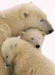 motherly love6