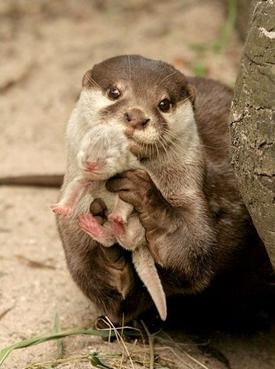 motherly love7