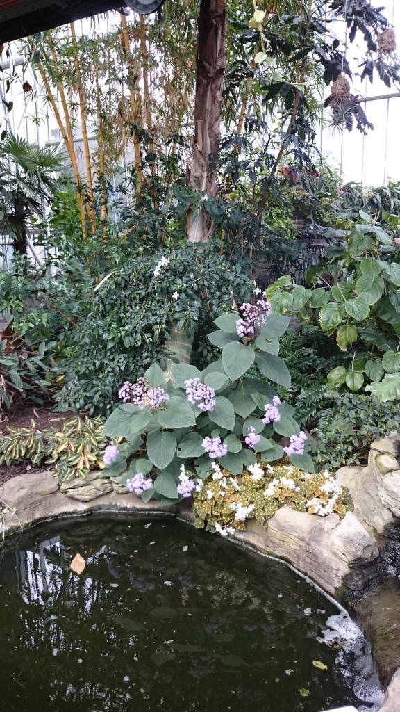 barbican garden (10)
