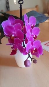 My Bathroom Orchid
