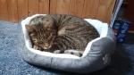 catbasket (1)