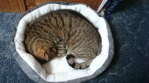 catbasket (3)