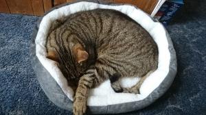 catbasket (5)