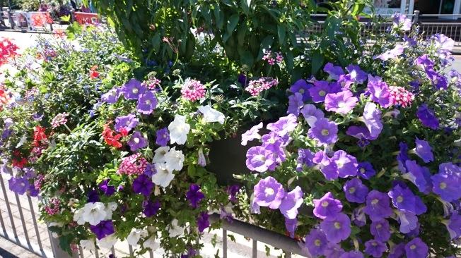 Leyton flowers (1)