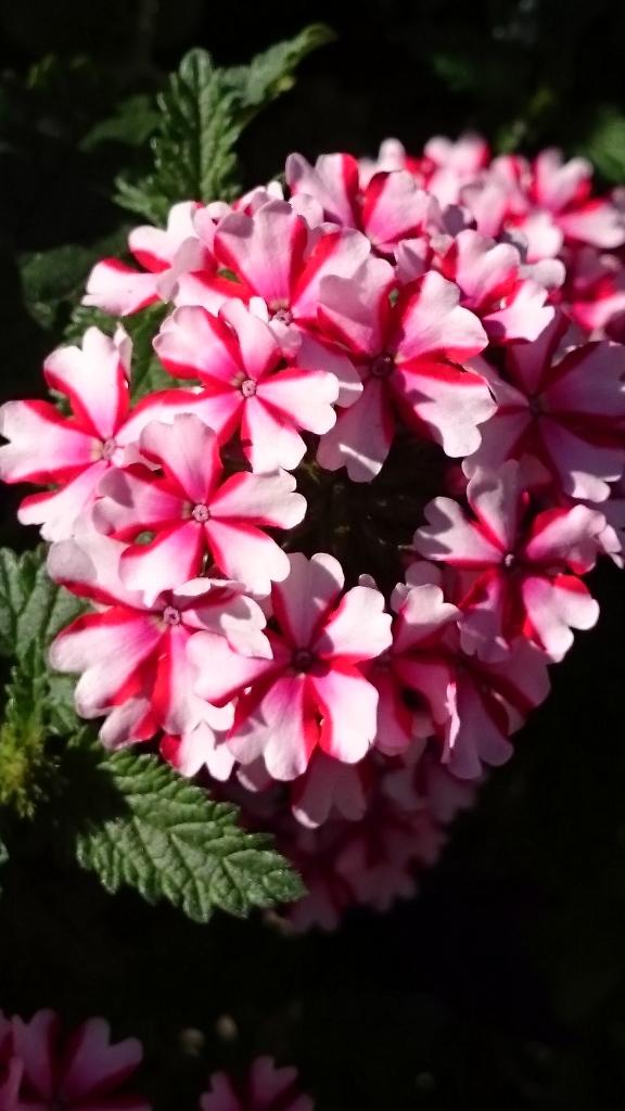Leyton flowers (5)