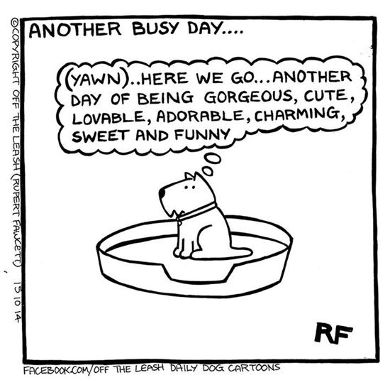 dog-fun1