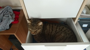 cat-in-the-drawer-1