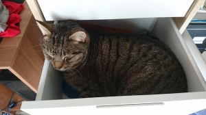 cat-in-the-drawer-2