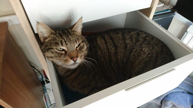 cat-in-the-drawer-3