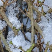 snow 28.2.to1.3 (15)