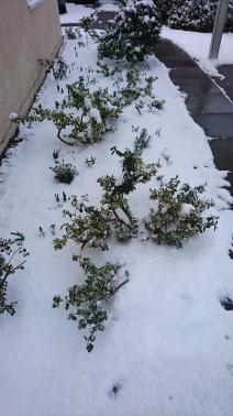 snow 28.2.to1.3 (19)