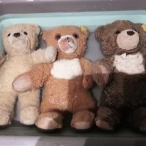 teddy b (7)
