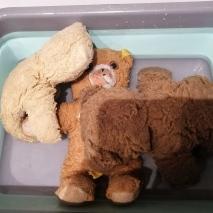 teddy b (8)