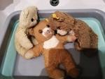teddy b (9)